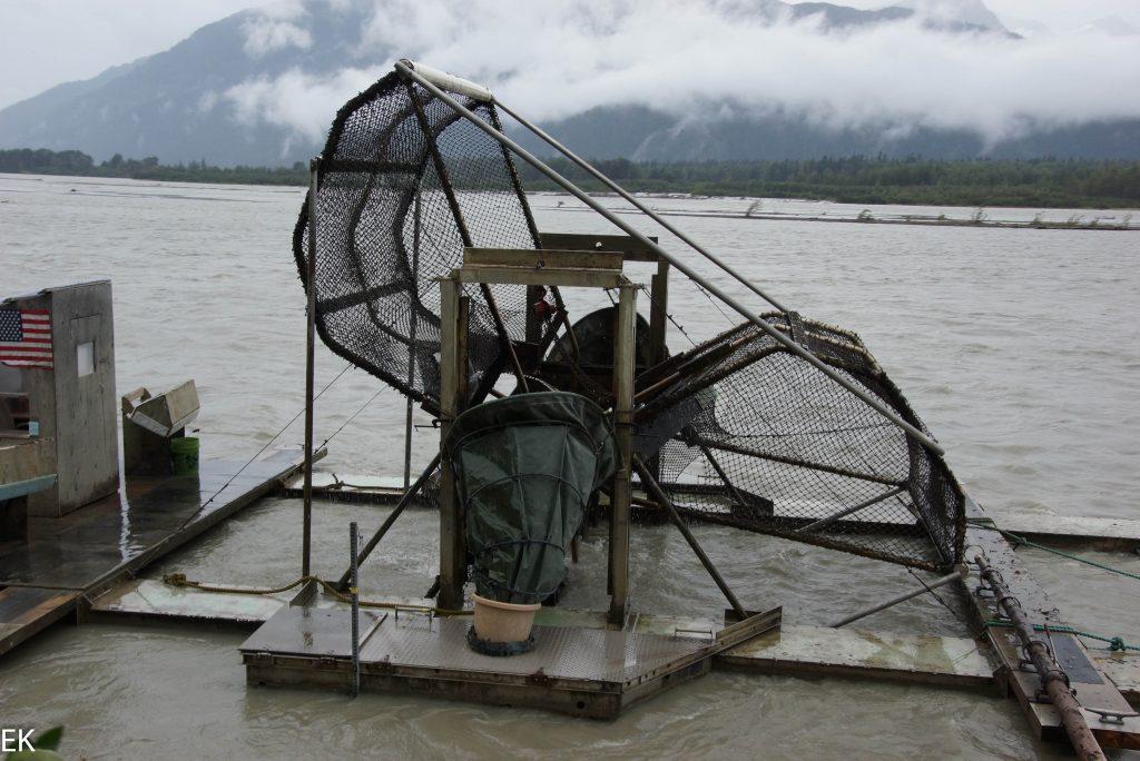 Fishwheel:Fischen für Dummys, alles geht automatisch, der Fluß treibt das Rad an.