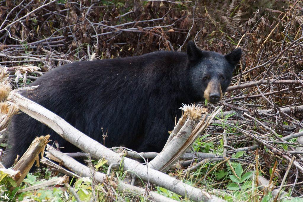 Wasn das für ein Riesen-Grizzly?