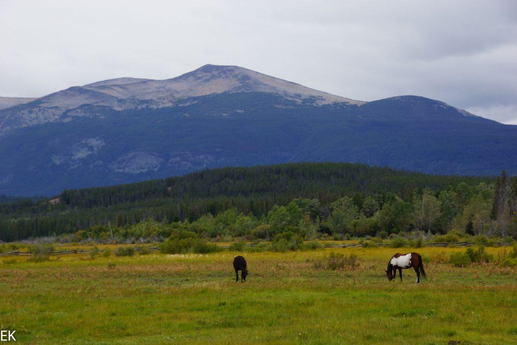 Die Pferdewiese vor der Lodge, Clearwater Lake dahinter.