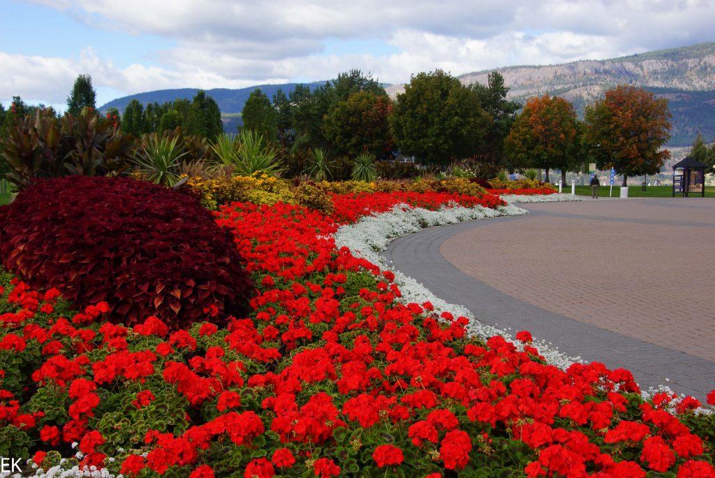 Blütenpracht an der Promenade