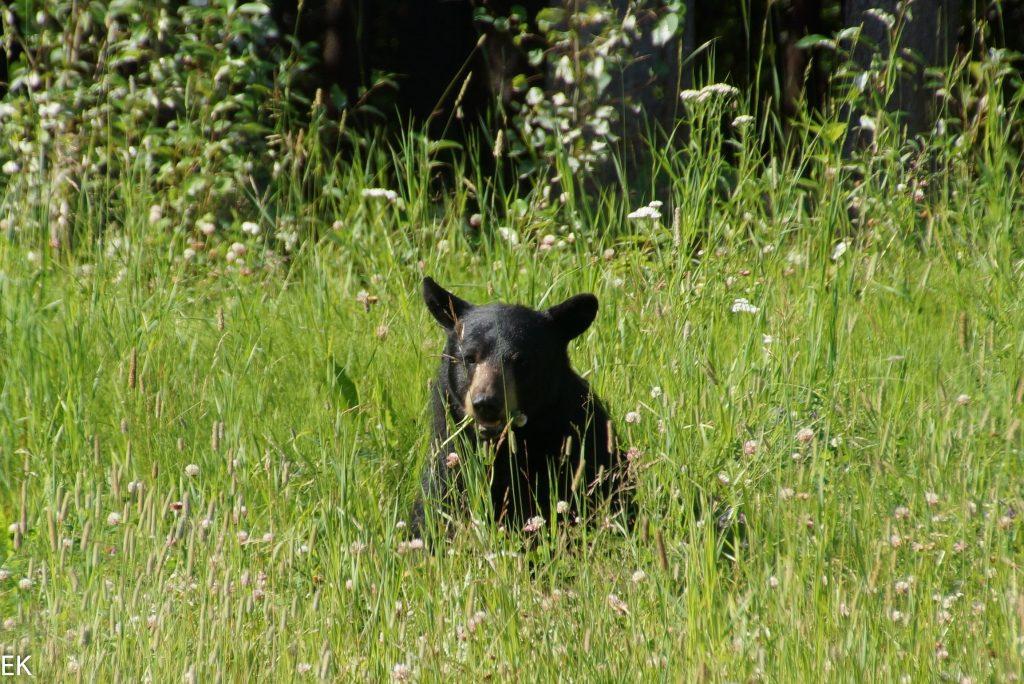 Endlich ein Bär, der sich fotografieren läßt!