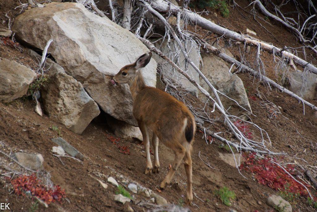 Ein Bambi-Bild muss auch mal sein