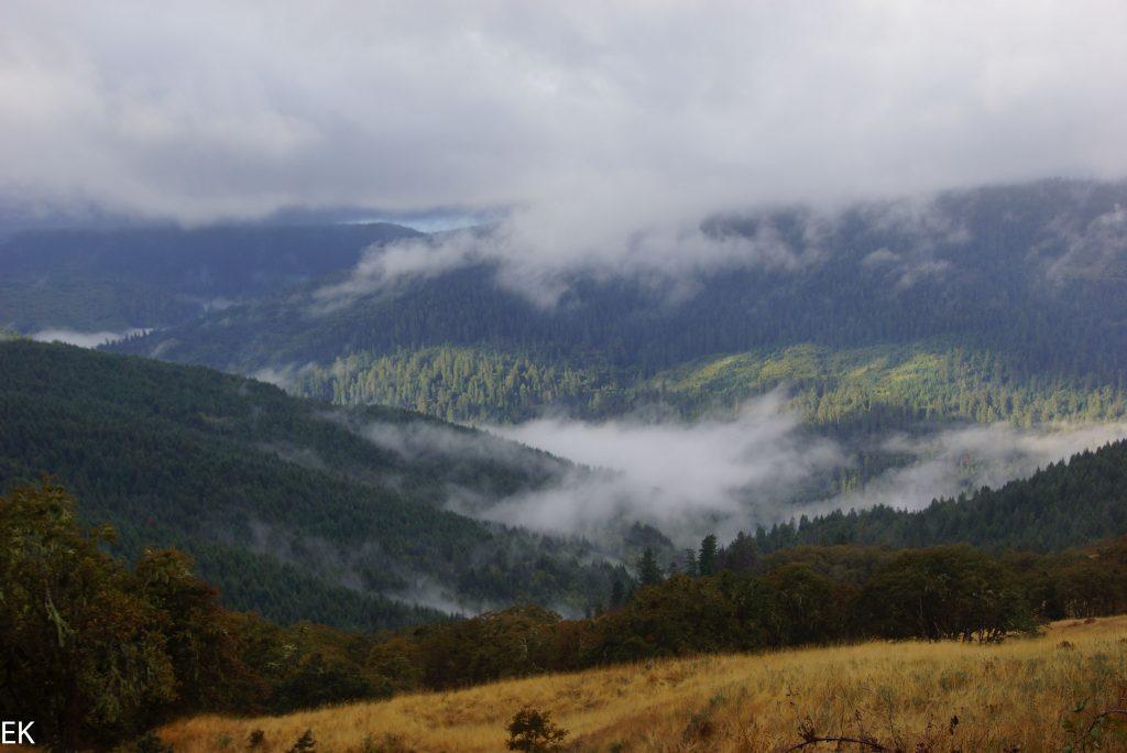 Prariewiese vor den Redwod Wäldern