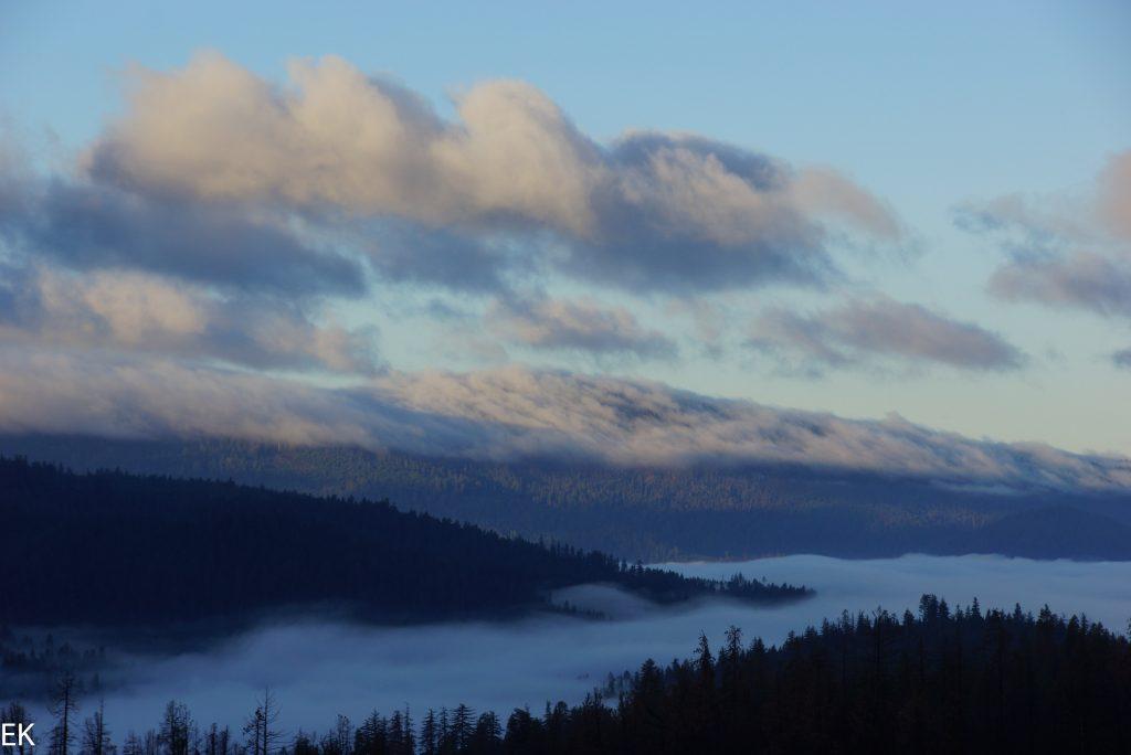 Redwoods im Nebel