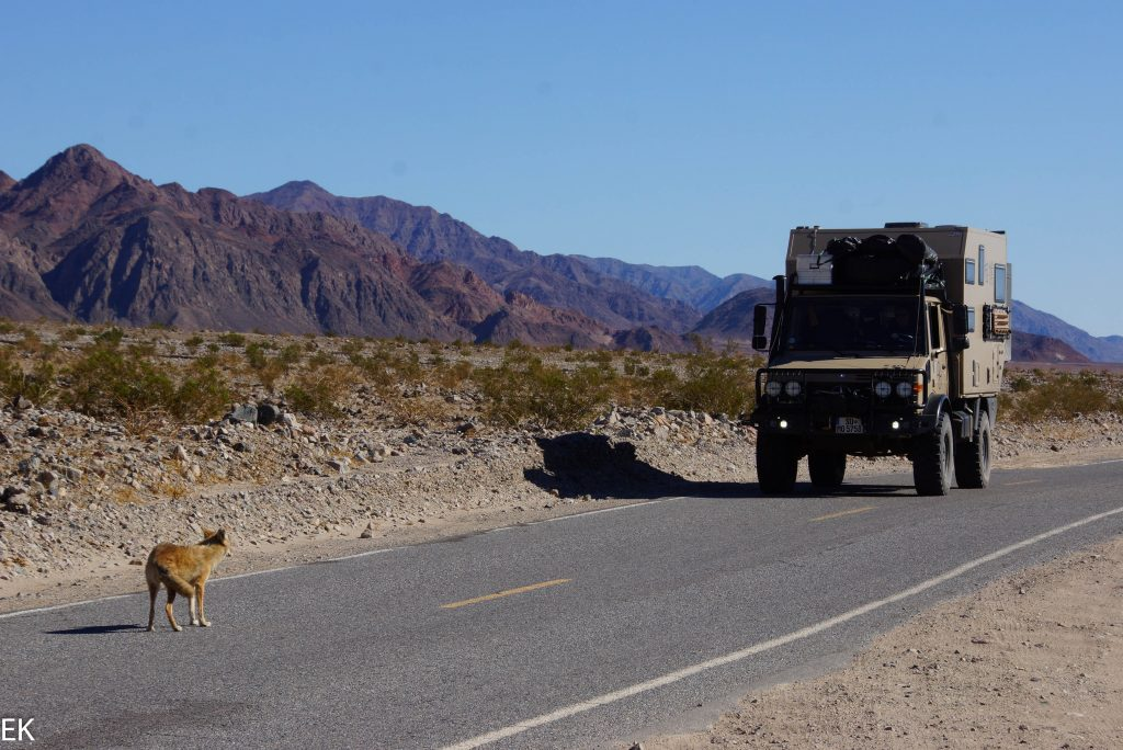 Coyote meets SUMO
