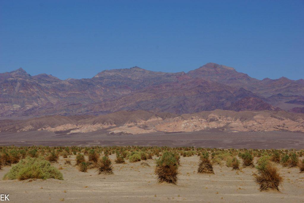 """""""Devils Corn Field"""" und Sand Dunes"""