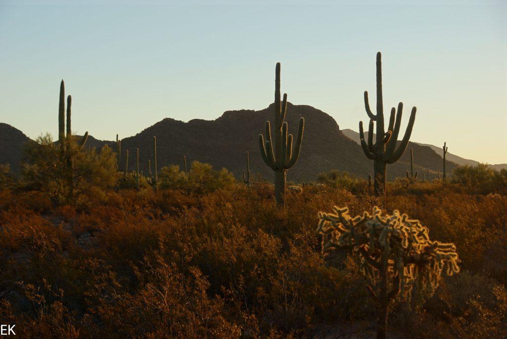 """Mogenstimmung in der """"grünen"""" Sonora Wüste"""