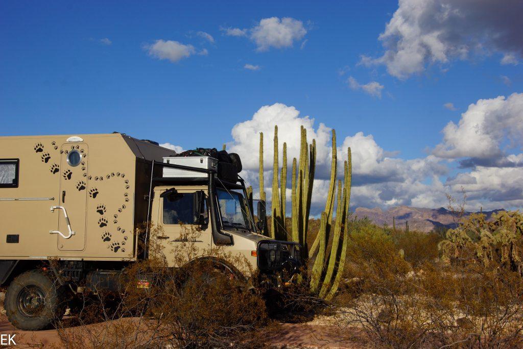 """SUMO neben einem """"Organ Pipe Cactus"""""""